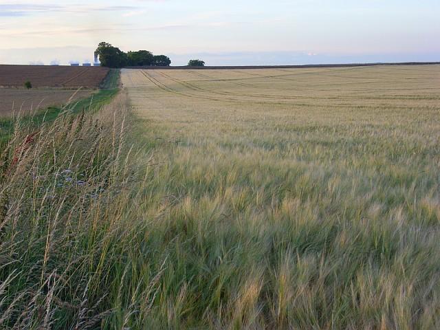 Farmland above Blewbury