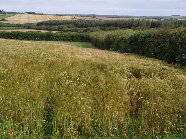 Field above Newlands Moor