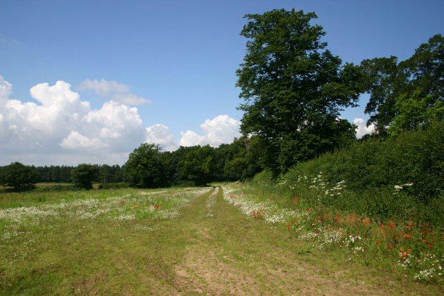 Set-aside field near Litcham