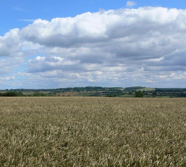 Farmland near the Rolleston Gated Road