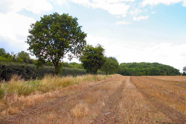Farmland near Tittleshall
