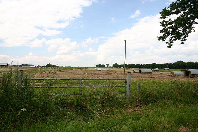 Pig farm near Mileham