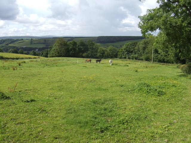 Horses grazing by Waygateshawhead