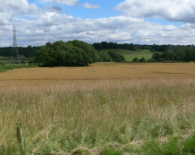 Noseley Farmland, Leicestershire