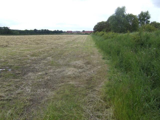 Hayfield near Under Shieldhill