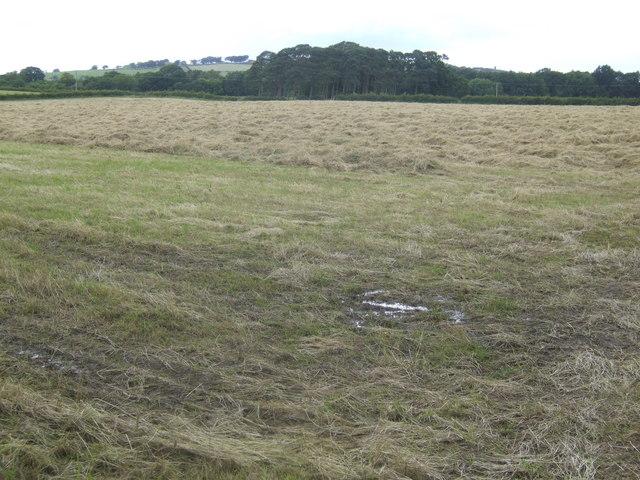 Hay field south of Carluke