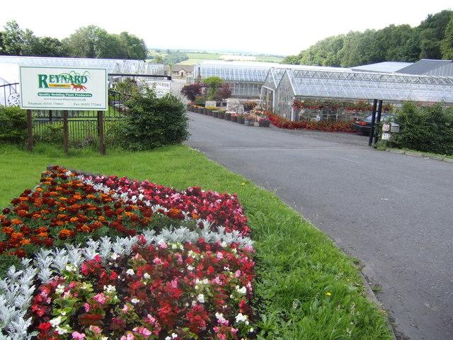 Reynard Nurseries