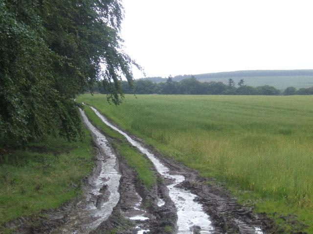 Farm track near Bogincaber