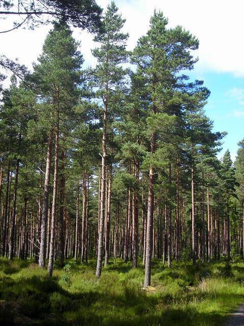 Whiteash Hill Wood