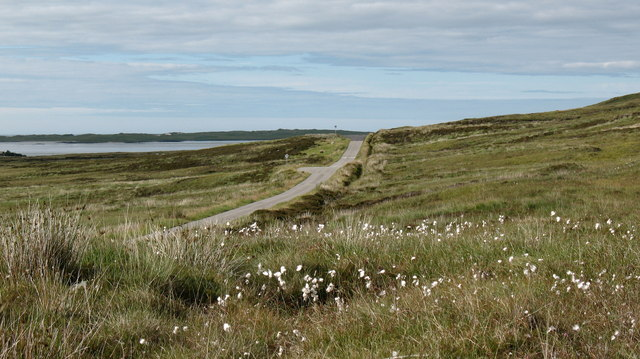 Cotton Grass at the roadside