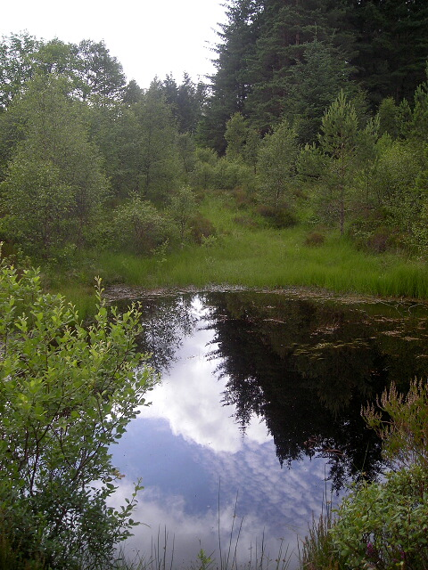 Small Pond in Leanachan Forest