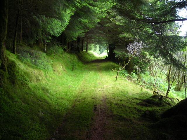 Track in Savary Glen