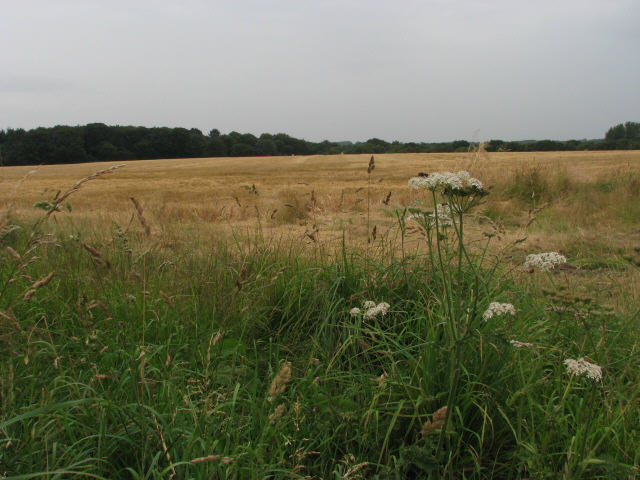 Field near Holly Heath Farm