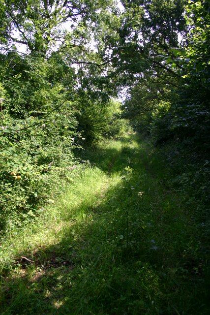 Green lane near Tittleshall