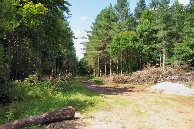 Eastfield Wood, near Tittleshall