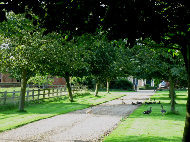 Thurgarton Old Hall driveway - with geese