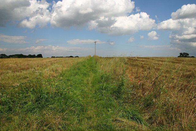 Field boundary at Brisley