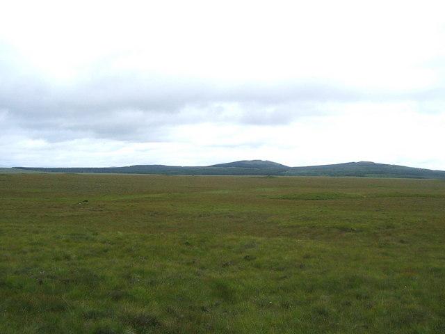 Boggy grassland
