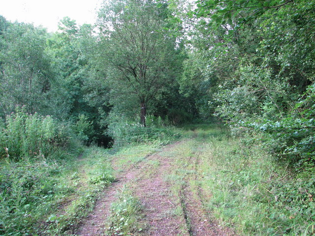 Footpath junction in Woolpitch Wood