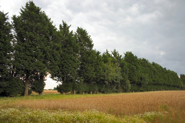 Treeline near Stanfield