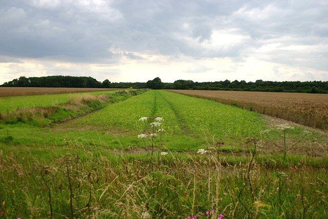 Strip field near Bittering