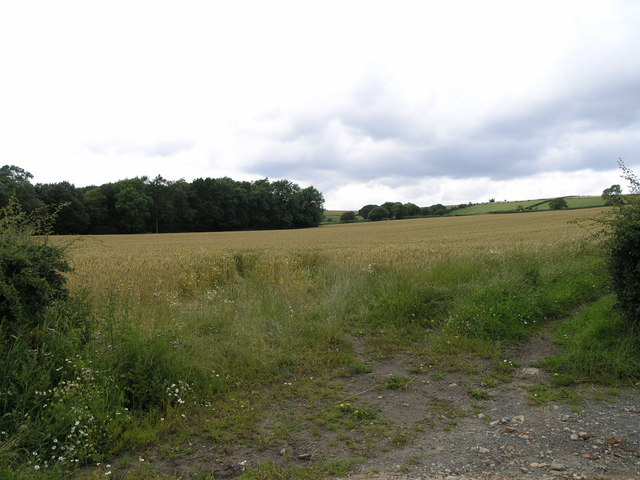 Field. Low Row.