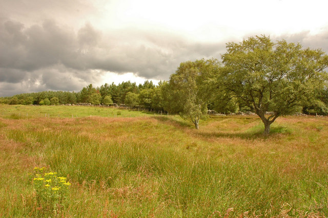 Trees near Easterton