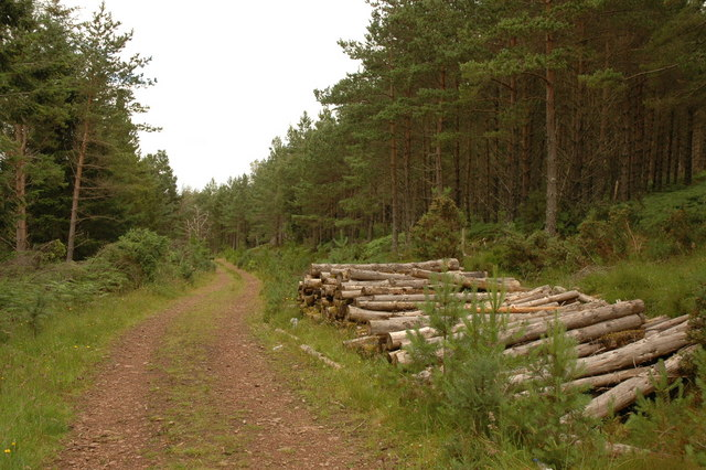 Dirr Wood