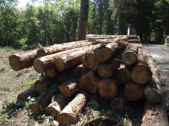 Logs in Hams's Wood