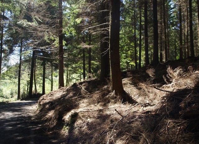 Hams's Wood