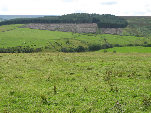 The valley of Reeding Burn and Whitehill Plantation