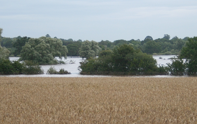 Wheat Field and Floods
