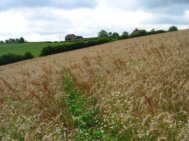 Footpath to Little Bainden Farm
