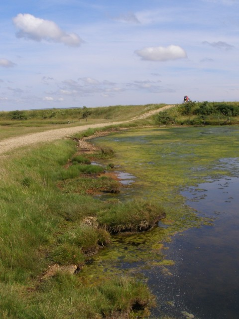 Approaching the sea wall, Pennington Marshes