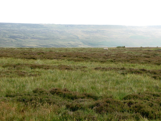 Moorland north of Rookhope (2)