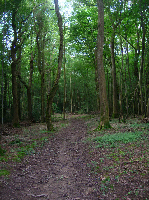 Little Calem Wood
