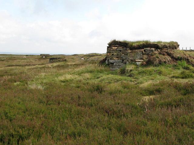 Line of grouse butts below Cuthbert's Hill