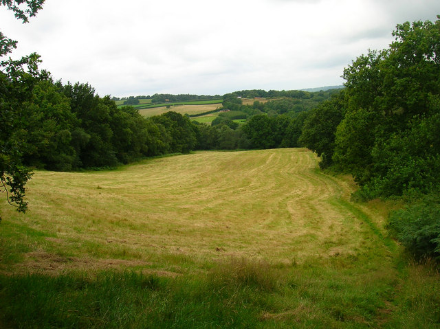 Field near Taylor's Farm