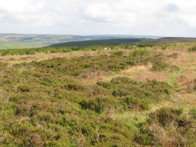 Hunstanworth Moor (2)