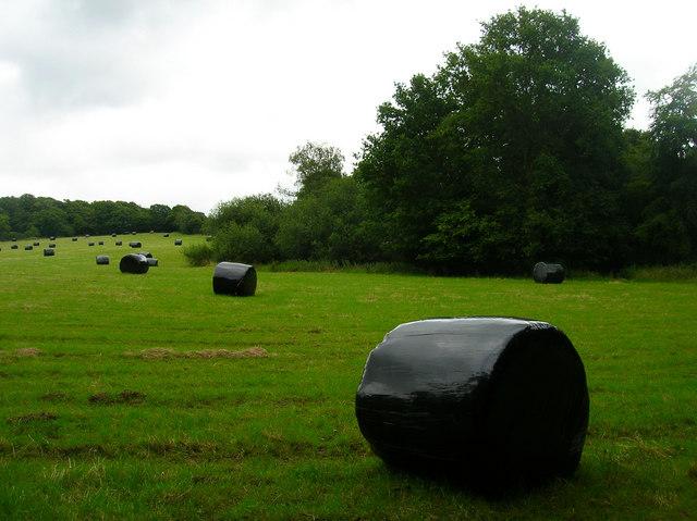 Wrapped Bales near Kingsdown Farm