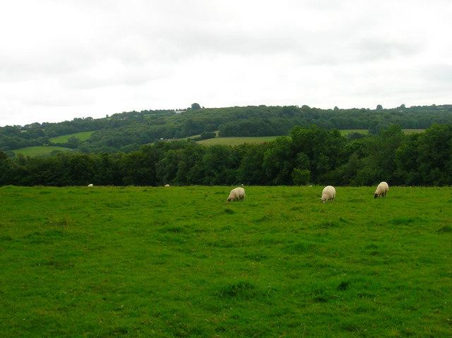 Milkhurst Wood