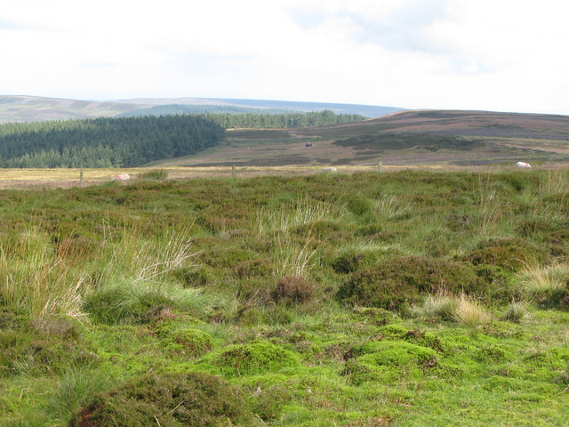 Moorland and the Baxtonlaw Plantation