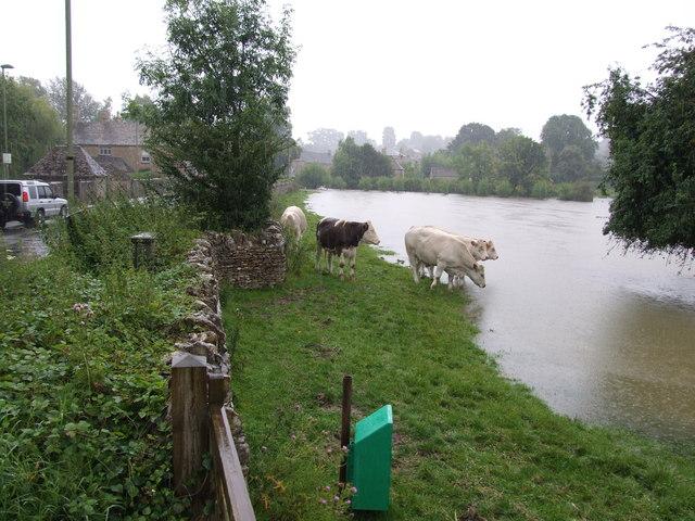 Flooded River Windrush