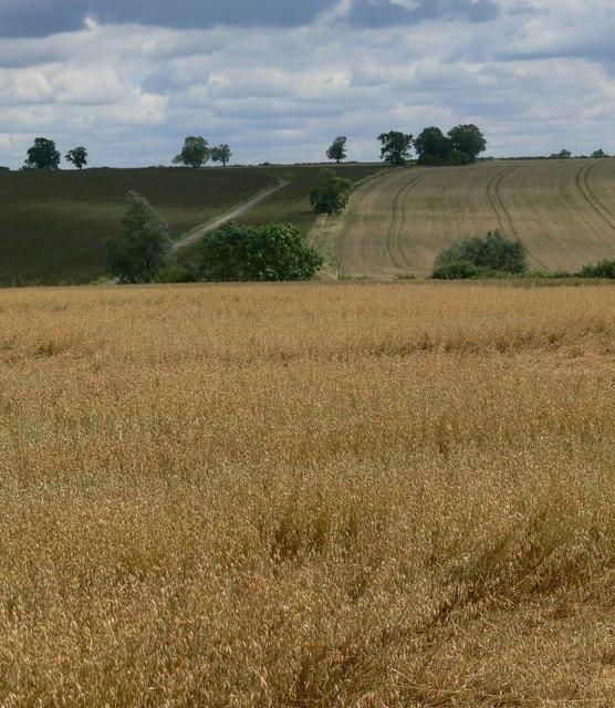 Farmland south of Goadby