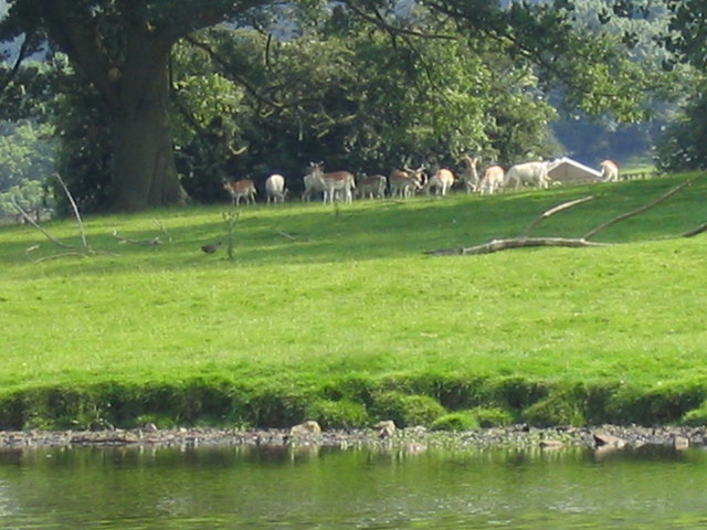 Swinton Park's deer residents