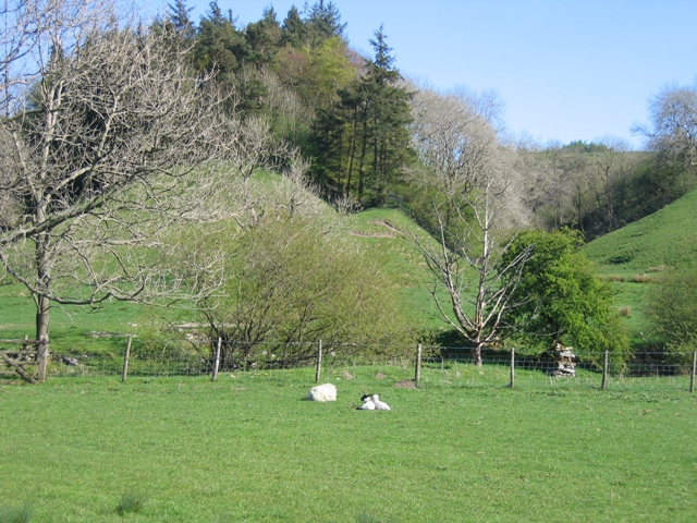 Pasture and Sheep near Gordale Beck