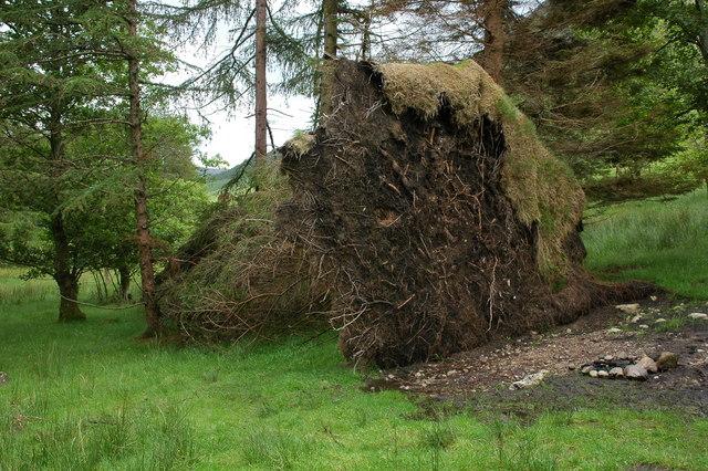 Fallen tree in Great Langdale