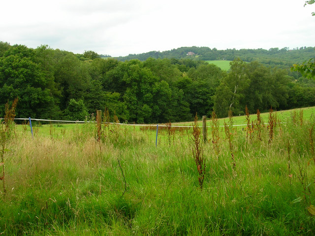 Twenty Acre Wood