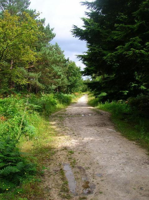 Bridleway, Dallington Forest