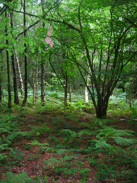 Dallington Forest
